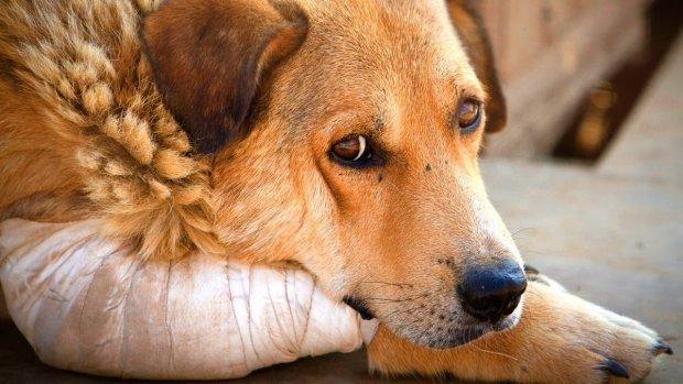 """Днепровская живодерка призывает убивать собак: """"минус одна шавка"""", - жестокость садистки поражает"""