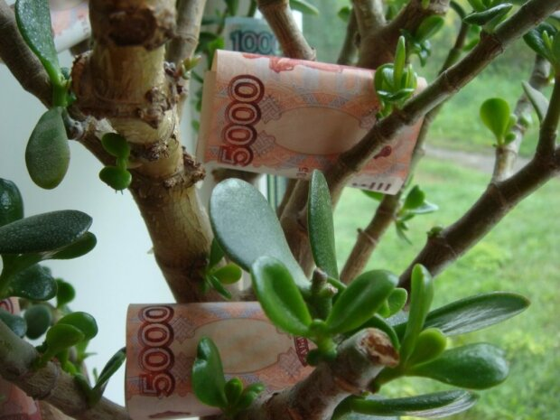 Магические свойства комнатных растений: как привлечь деньги в дом
