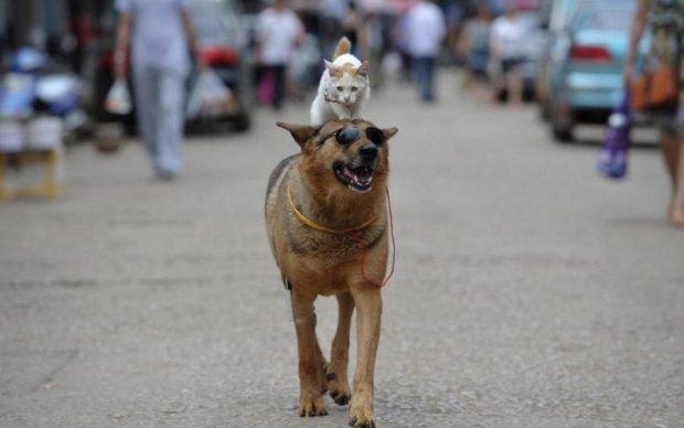 Собака-герой врятував кота і став зіркою мережі: кумедне відео
