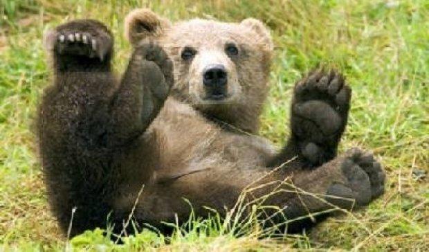 Медведь, напугавший всю семью, стал звездой YouTube