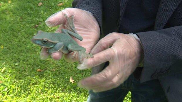 """""""Подарунок від жаби"""": педіатр розповіла, звідки беруться бородавки і як їх позбутися"""