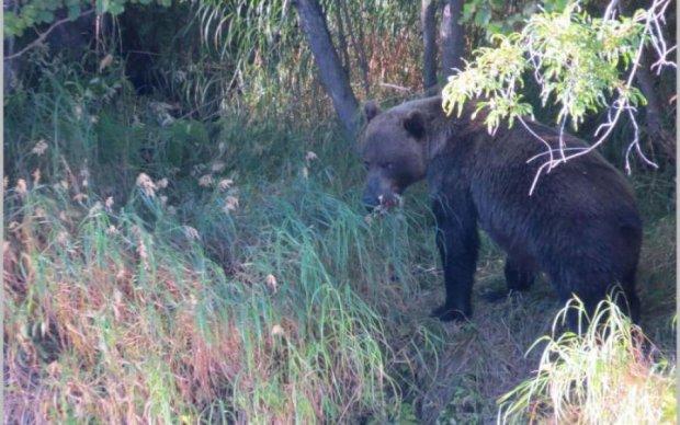 Величезний ведмідь розірвав туриста на очах друзів: відео 18+