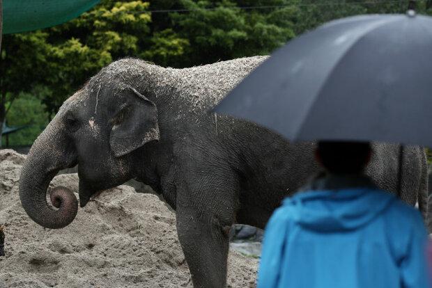 Слоны, фото: Getty Images
