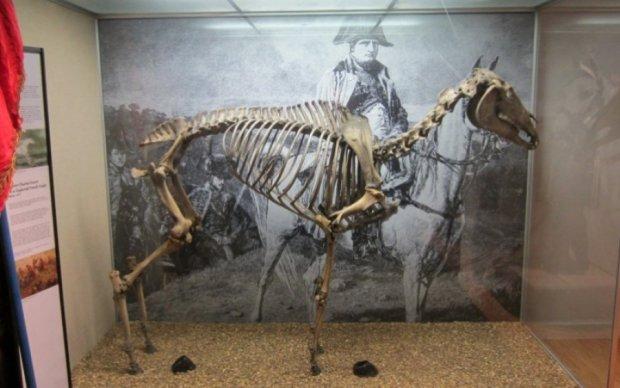 Загублене копито коня Наполеона знайшли у шафі