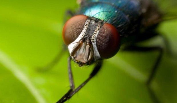 Китайські мухи переносять унікальний ген