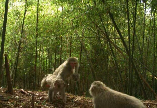 Возле Фукусимы животные, скриншот с видео