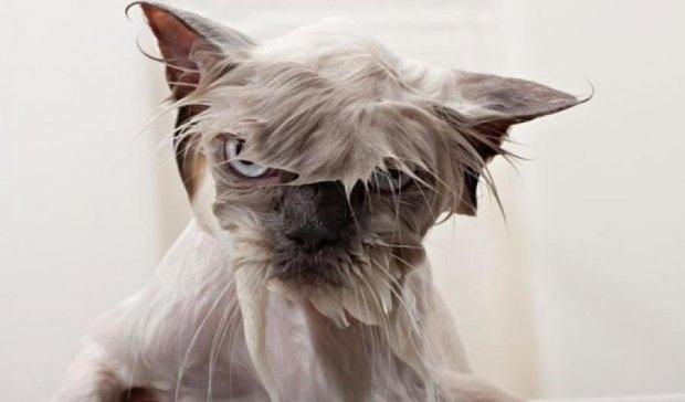 Настоящая безысходность: как кот принимал ванну (ВИДЕО)