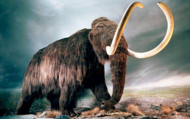 Палеонтологи назвали неожиданную причину вымирания мамонтов