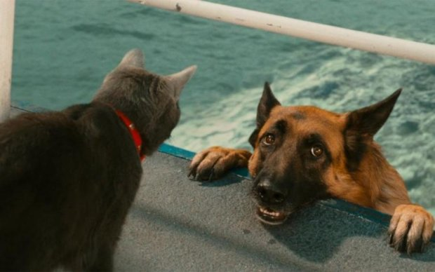 Как кот с собакой: сеть тронула необычная дружба