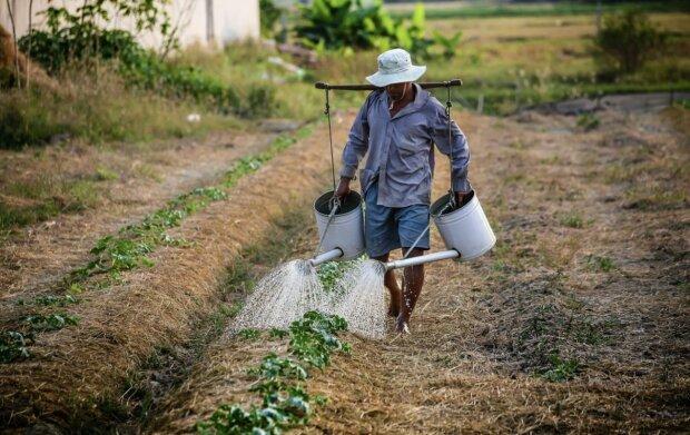 Фермер, фото з відкритих джерел