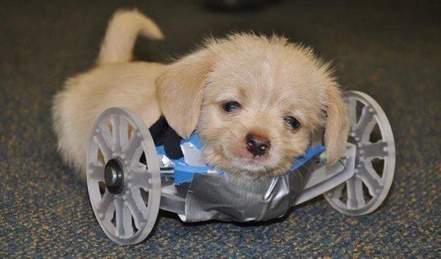 Дволапому щенку смастерили инвалидную коляску на 3D-принтере