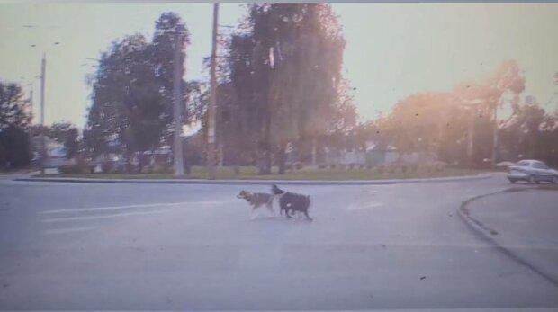 Собаки, фото: скріншот з відео