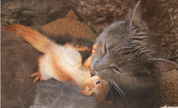 Кішка стала мамою для маленьких білченят: вигодувала і виходила дитинчат