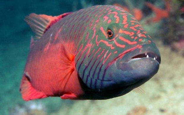 Перетворення риби з хлопчика на дівчинку вперше зняли на камеру
