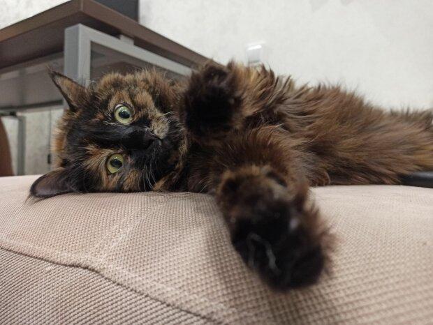 "Кішка, фото ""Знай.ua"""