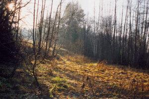 Погода в Україні, фото: lib.ru