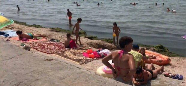 Курорт под Запорожьем оккупировали медузы - жалят больнее чем крапива, как защититься