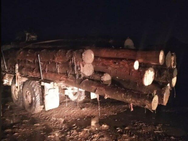 Незаконна порубка лісу, фото з Фейсбук