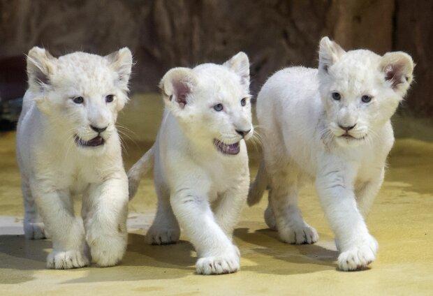 У легендарному зоопарку на світ з'явилися унікальні тварини: у дикій природі їх майже не залишилося