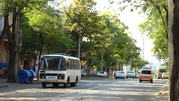 Заполонили воду та повітря: українців атакувала дивна пошесть, люди у паніці