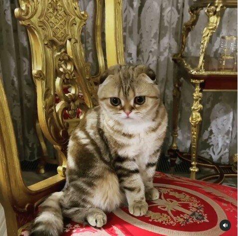 Кошка Баскова, фото: Instagram