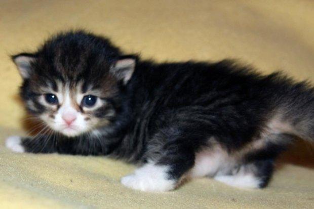 Шведська пара назвала котів на честь Ахматової
