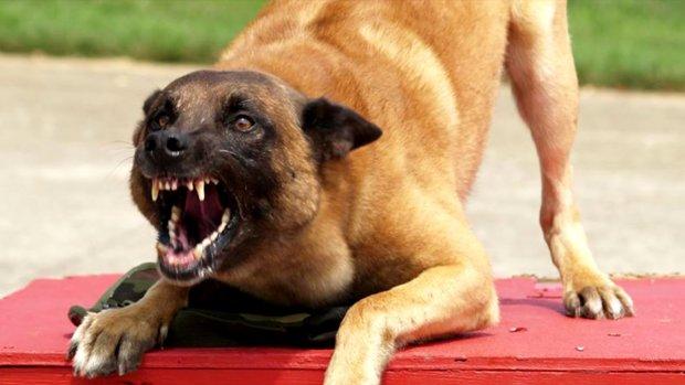 На Одещині дитину ледь не розірвали скажені звірі: сусіди оніміли від криків