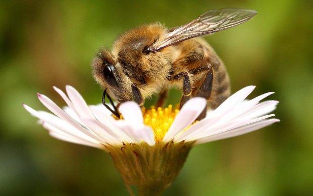 Танцуют, указывают направление и дают советы: ученые расшифровали язык пчел и удивились