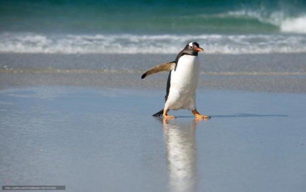 Пингвин покорил сеть забавной выходкой: видео