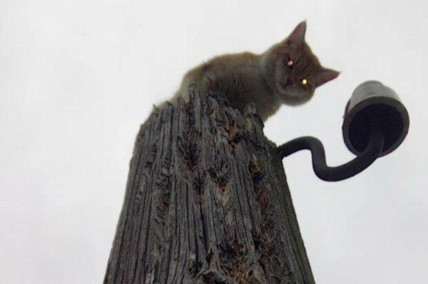 Кіт на стовпі, Фото: ЗооСпас в Єкатеринбурзі / Vk.com