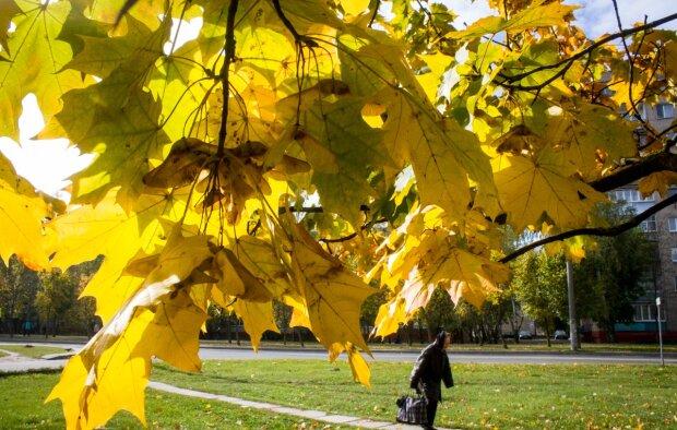 Погода покажет запорожцам, что такое настоящая осень: прогноз на 27 октября