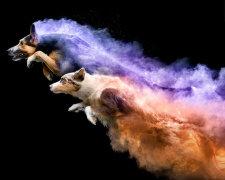 собаки в кольоровій пудрі