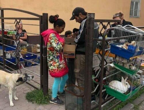 Тернополяни борються зі стихійною торгівлею - віддають кошенят і цуценят на загибель