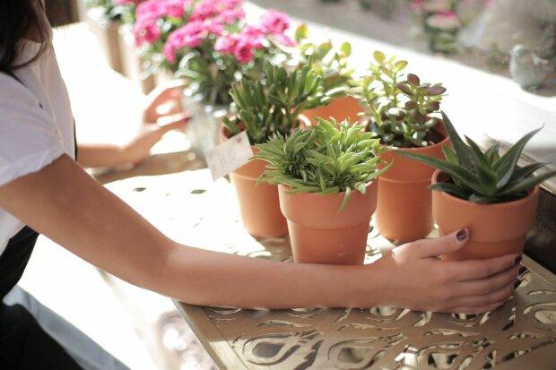 Комнатные растения, фото: rus.media