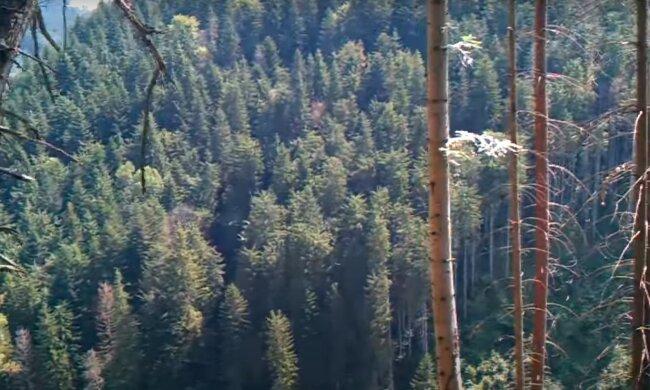 Закарпатский лес, скриншот из видео