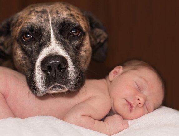 Мы не заслуживаем собак - четыре пса спасли брошенную родителями малышку