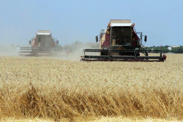 Аномалия аграрного рынка: украинцы рискуют остаться без хлеба, целая отрасль под угрозой