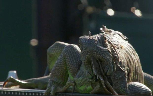 Огромная ящерица прервала теннисный поединок в Майами