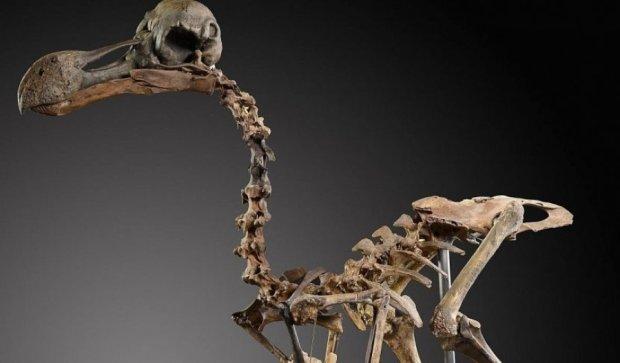 Уникальный скелет продадут на аукционе