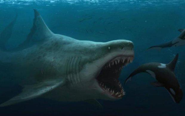 В Марианской впадине нашли доисторическое существо: видео