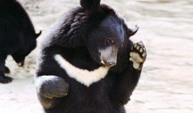 Спокійні на вигляд ведмеді виявилися людожерами
