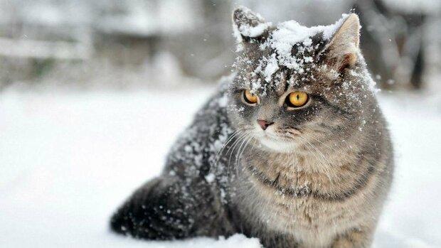Котик, фото - Pinterest