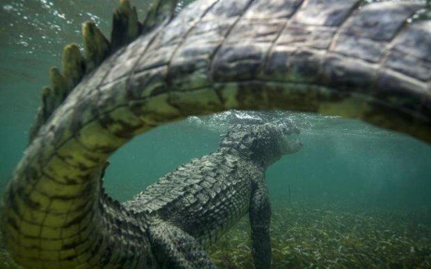 Крупнейшая рептилия может погибнуть