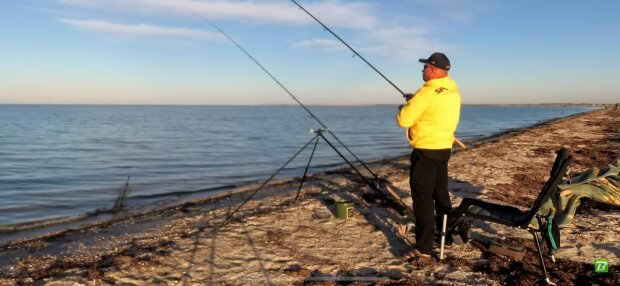 Азовское море заполонила стая мальков пеленгаса - успели вырасти за лето