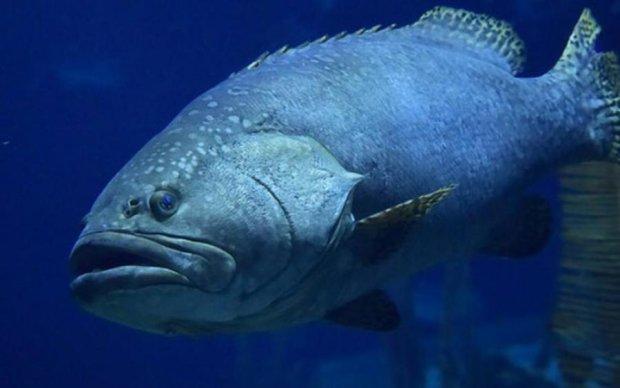 Огромный монстр из глубин проглотил акулу прямо перед камерой
