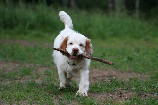 Собака, фото з відкритих джерел
