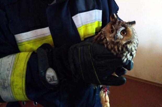 У Дніпрі рятувальники витягли вилупату крихітку з жахливої пастки - була приречена і налякана