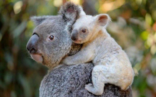 В австралийском зоопарке родилось белое чудо природы
