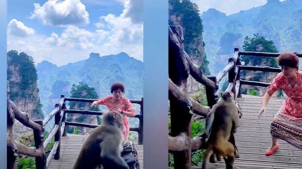 Обезьяна украла сумку в Китае, фото: скриншот с видео