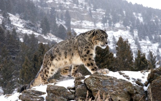 На грани исчезновения: заядлые охотники стали хранителями самых красивых животных дикой природы